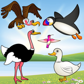 Birds Game for Toddlers : Bird Species Puzzle ! Educational Puzzles Games - FREE app